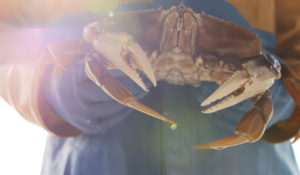 Oregon Dungeness Crab Commission – OAB WINNER 2016